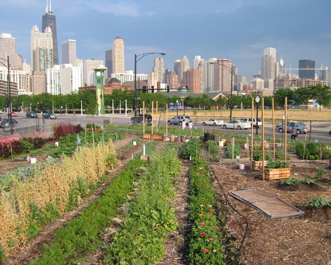 Growing food locally integrating agriculture into the built environment buildinggreen - Urban gardening in contaminated areas ...