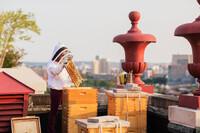 Urban Rooftop Beekeeping in practice