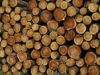 A pile of logs by the roadside