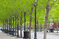 An urban sidewalk with young trees planted.