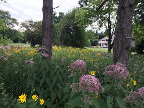 A backyard prairie a the home of Drew Lathin