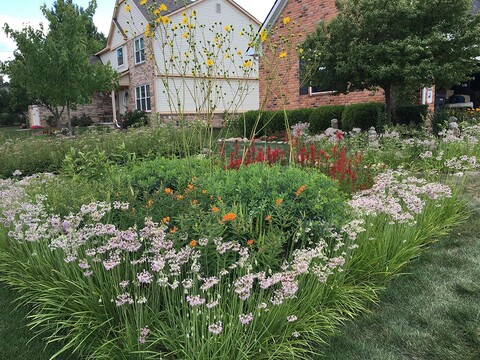A rain garden at the home of Drew Lathin