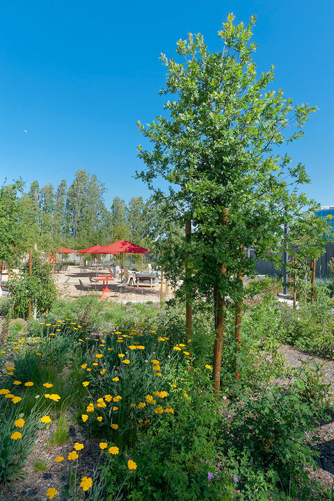 Google campus with native plantings
